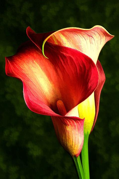 Kerri Myatt Flower Logo